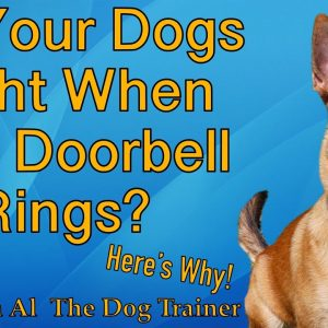 Why Do My Dogs Fight When The Doorbell Rings? - Tips From Al The Dog Trainer