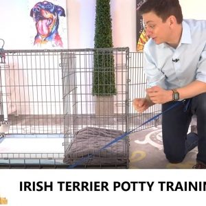 Irish Terrier Potty Training from World-Famous Dog Trainer Zak George, Train an Irish Terrier Puppy