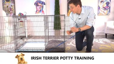 Irish Terrier Potty Training from World-Famous Dog Trainer Zak George, Train an Irish Terrier Puppy