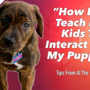 How To Teach Your Kids To Interact With Your Puppy - Tips From Al The Dog Trainer