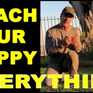 How to Train Your PUPPY to do Everything - Puppy Dog Training Video - Robert Cabral
