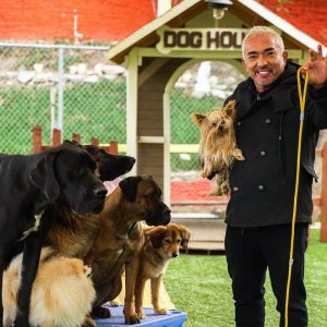 CESAR MILLAN TEACHES YOU HOW TO USE THE LEASH!