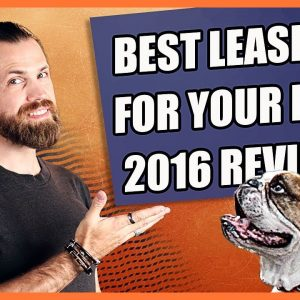Choose the Best Leash for Dog - 2016 Review Roundup