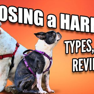 Choosing a Dog Harness - Best Ones and How to Use