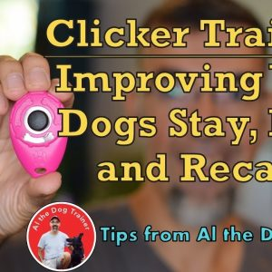 Clicker Training - Improving Your Dogs Stay, Heel, and Recall!