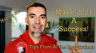 Creating a Personal Daily Dog Training Habit - Make 2021 A Success!