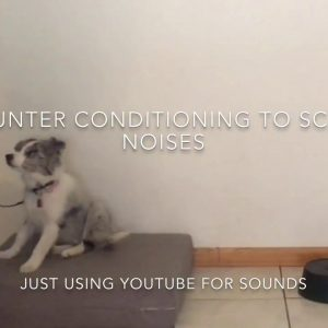 Counter Conditioning And Rapid Reward Treating For Scary Noises For Puppy Training And Dog Training