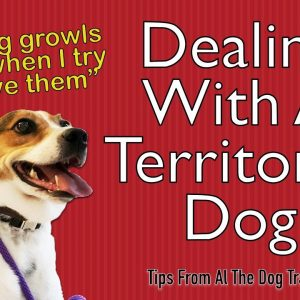 Dealing With A Territorial/Aggressive Dog - Tips From Al The Dog Trainer