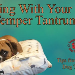 Dealing With Your Dogs Temper Tantrums - Tips From Al The Dog Trainer