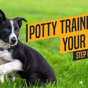 Dog Training Basics - Puppy Potty Training