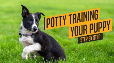 Dog Training Basics - Puppy Potty Training