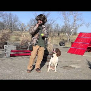 Dog Training Goals for the New Year Part Two