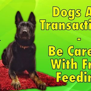 Be Careful With Free Feeding Your Dog; Dogs Are Transactional - Tips From Al The Dog Trainer