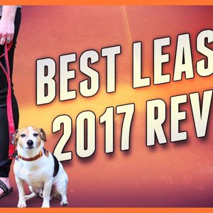 Find the Best leash for dogs - 2017 review + accessories