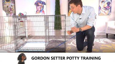 Gordon Setter Potty Training from World-Famous Dog Trainer Zak George -  Train a Gordon Setter Puppy