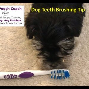 Getting your dog to like his toothbrush