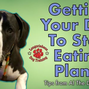 How Do I Stop My Dog From Eating Plants? - Tips From Al The Dog Trainer