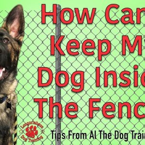 How To Keep Your Dog Inside The Fence - Tips From Al The Dog Trainer