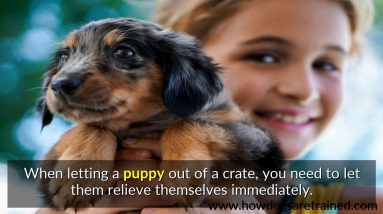 How To Potty Train A Puppy Without A Crate