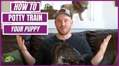 How to Potty Train your Puppy FRIENDLY! Everything you need to know!