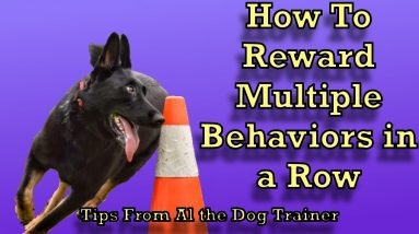 How To Reward Multiple Behaviors In A Row! - Tips From Al the Dog Trainer