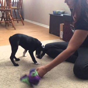How to Stop Puppy Dangerous Growling & Biting part 2