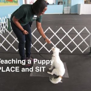 How To Teach a Puppy Place and Sit and create Calm Puppies
