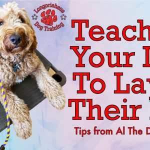 How To Teach Your Dog To Lay On Their Bed - Tips From Al The Dog Trainer