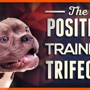 How to Teach Your Dog to Listen With the Positive Training Trifecta!