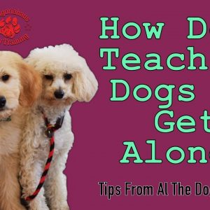 How To Teach Your Dogs To Get Along - Tips From Al The Dog Trainer
