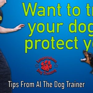 How To Train Your Dog To Protect You - Tips From Al The Dog Trainer