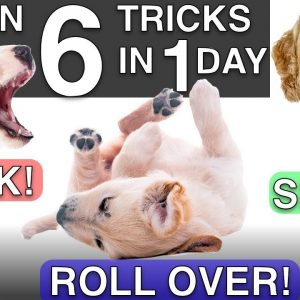 How to Train your Puppy 6 Tricks in 1 Day!