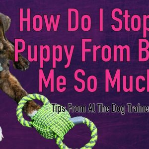 Mouthy Dog |  How To Keep Your Dog From Mouthing - Tips From Al The Dog Trainer
