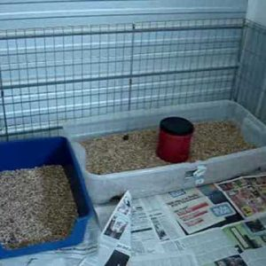 litter box training for puppies and dogs how to make a safe place for your new puppy