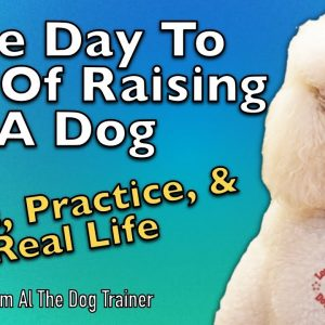 The Day To Day Of Raising A Dog:  Drills, Practice, and Real Life - Tips From Al The Dog Trainer