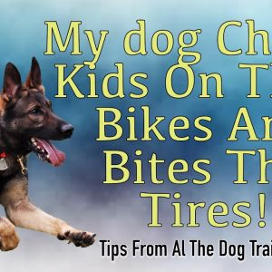My Dog Chases Kids On Their Bikes And Bites Their Tires!- Tips from Al The Dog Trainer