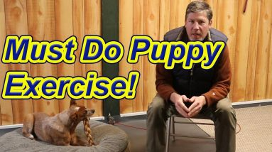 Must do Puppy Exercise- especially for resource guarders