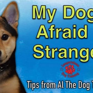 My Dog Is Afraid Of Strangers - Tips From Al The Dog Trainer