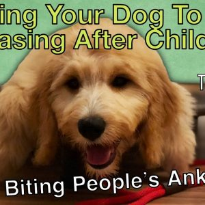 How Do I Get My Dog To Stop Going After Peoples Ankles? - Tips From Al The Dog Trainer