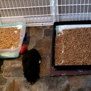 New Puppy Litter Box Training Part 4