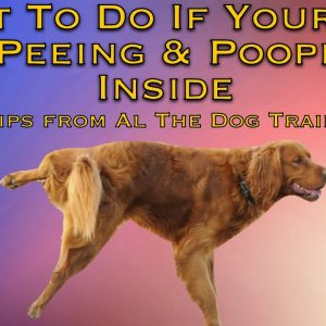 What To Do If Your Dog Is Peeing & Pooping Inside - Tips From Al The Dog Trainer