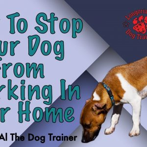 How To Stop Your Dog From Marking In Your Home - Tips From Al The Dog Trainer
