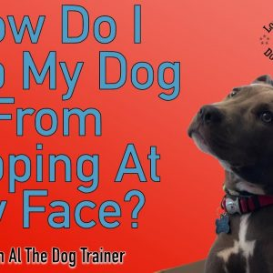 How To Stop Your Dog From Nipping At Your Face - Tips From Al The Dog Trainer