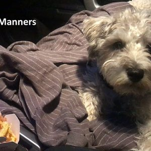 Puppy Manners and Safety - Keeping them off of food