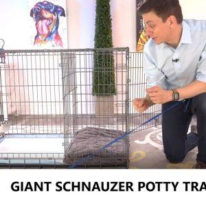 Giant Schnauzer Potty Training from World-Famous Dog Trainer Zak George -  Giant Schnauzer Puppy