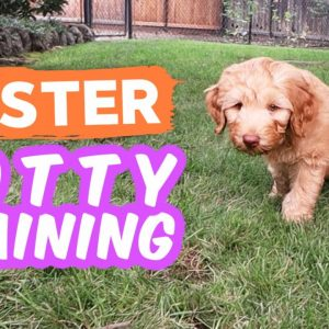 6 Potty Training Secrets NOBODY Shares 🐶 Seriously try these with your puppy!!!