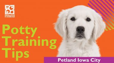 Tips On How To Potty Train Your Puppy