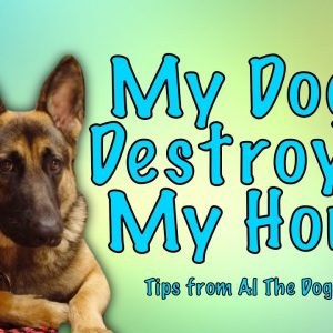What To Do If Your Dog Is Destroying Your Home - Tips From Al The Dog Trainer