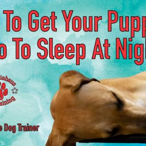 How To Get Your Puppy To Go To Sleep At Night - Tips From Al The Dog Trainer