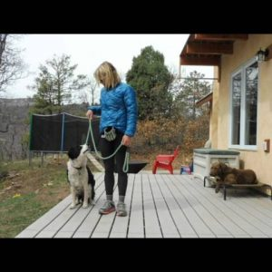 Train your Dog to Heel, NO MORE LEASH PULLING! part 1